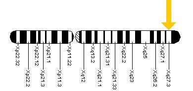 caracteristicas del sindrome de x fragil