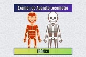 Paradigmia_Test_Locomotor_Tronco