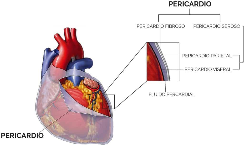 pericardio del corazon
