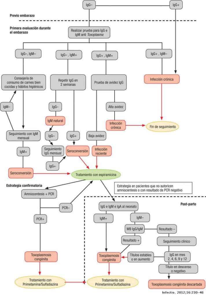 tratamiento toxoplasmosis
