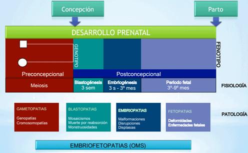 embriofetopatias